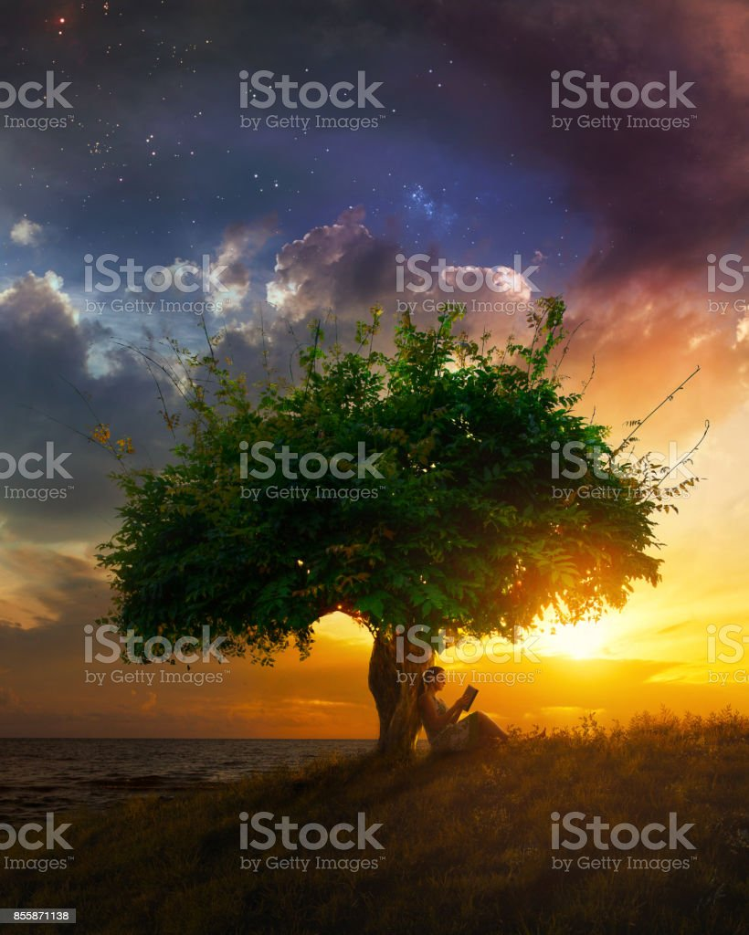 Woman Sitting Under Tree In Forest Reading Book High-Res