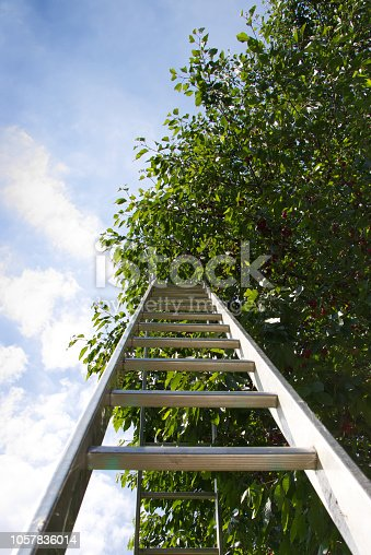 A view of the ladder from below.