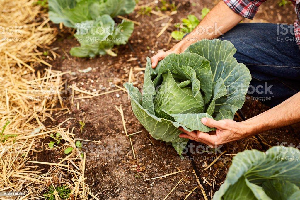 Klaar voor oogst! foto