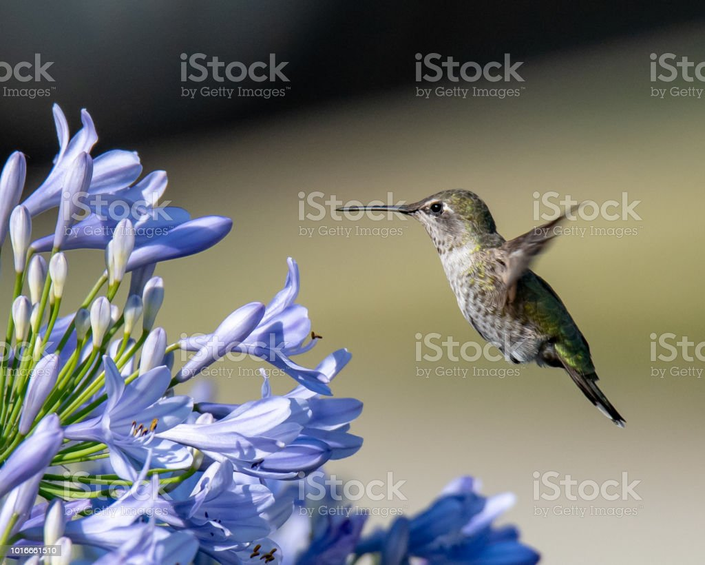 Ready for nectar stock photo