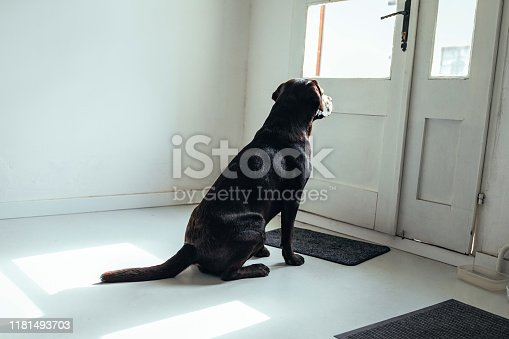 An adorable dog at home waiting for his owner