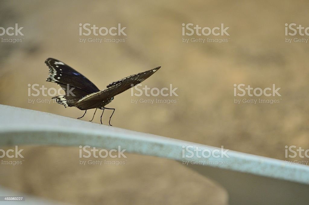 ready for take off royalty-free stock photo