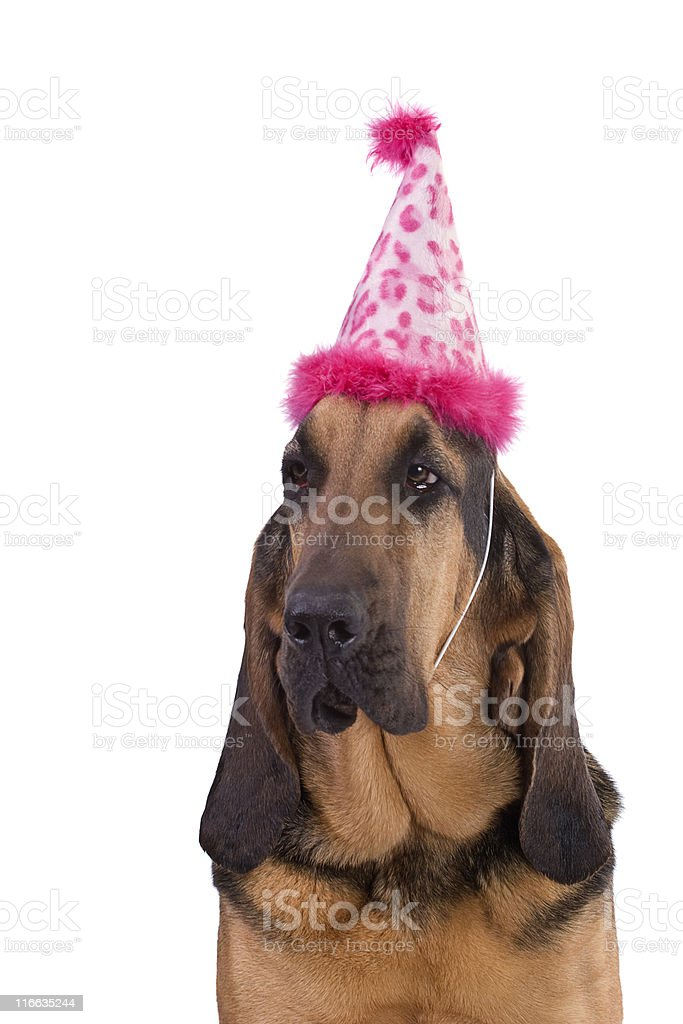 Ready for the Party royalty-free stock photo