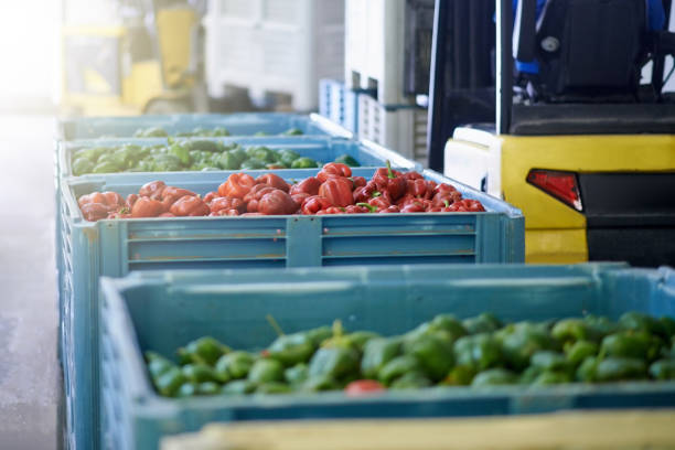 Ready for the production line Shot of fresh green and red peppers in crates in a vegetable processing plant food warehouse stock pictures, royalty-free photos & images