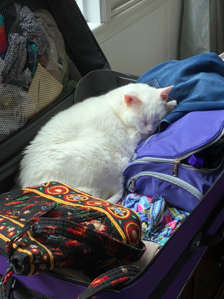 traveling with cats on amtrak