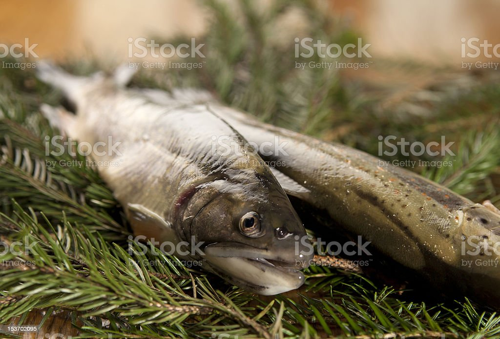 Ready to cook fresh rainbow trout royalty-free stock photo