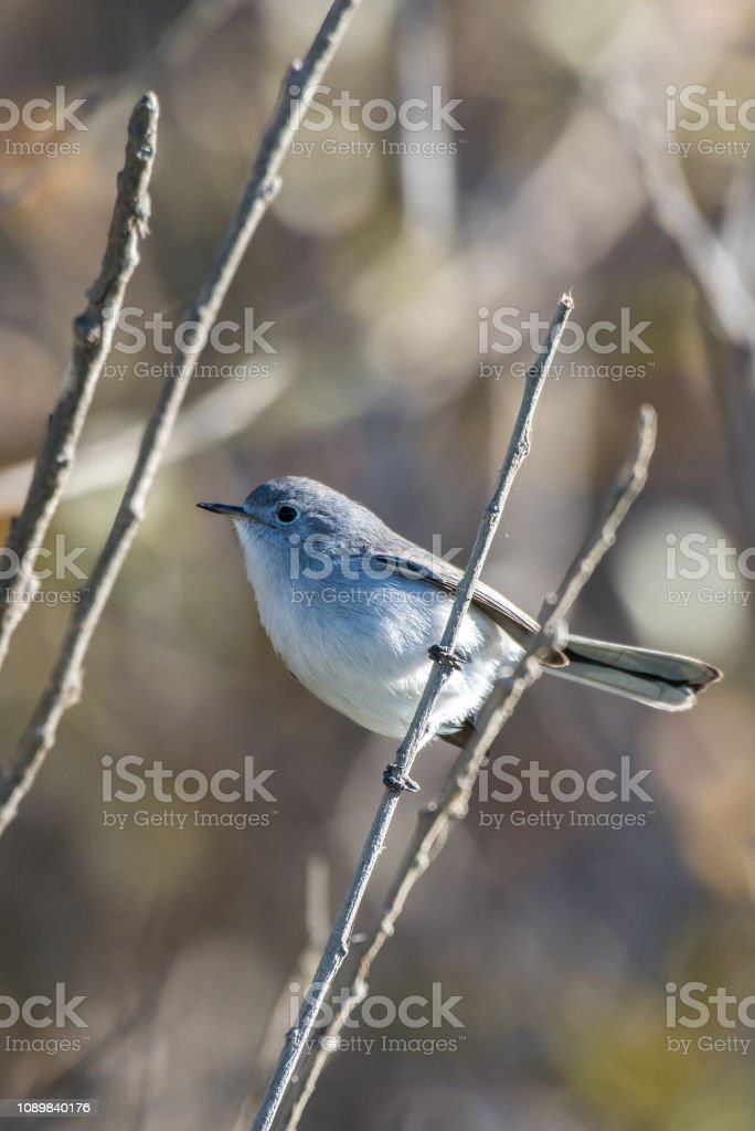 Ready to fly off at a moments notice. stock photo