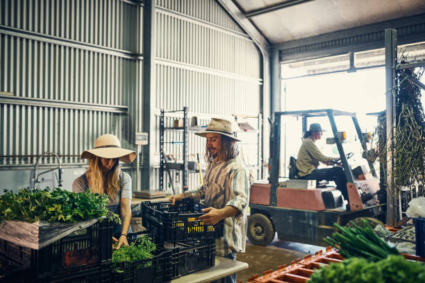 Ready to go to market Shot of a group of farmers packing freshly harvested herbs in their warehouse agricultural cooperative stock pictures, royalty-free photos & images