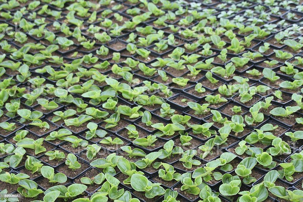 Ready to Plant royalty-free stock photo