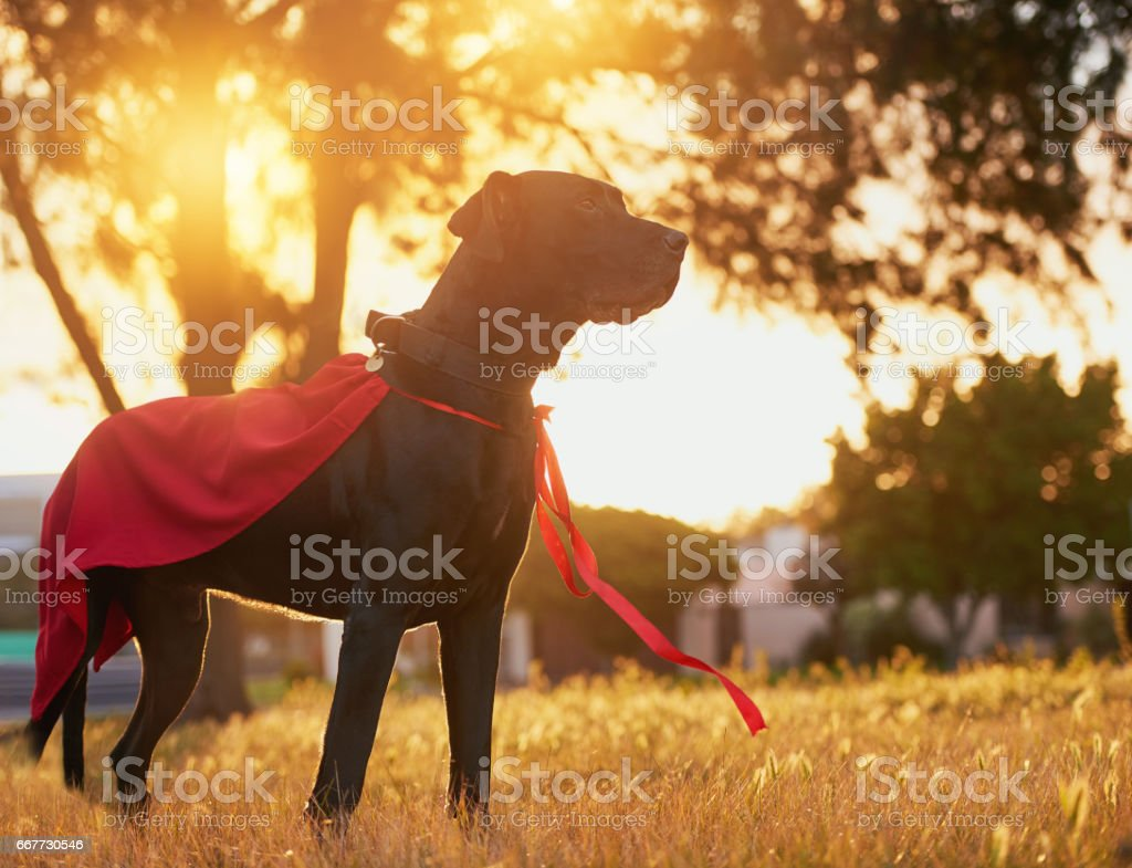 Ready to save the day stock photo