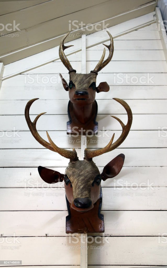 Real antler and wooden head of deer. stock photo