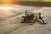 istock A real bat in nature 1046352050