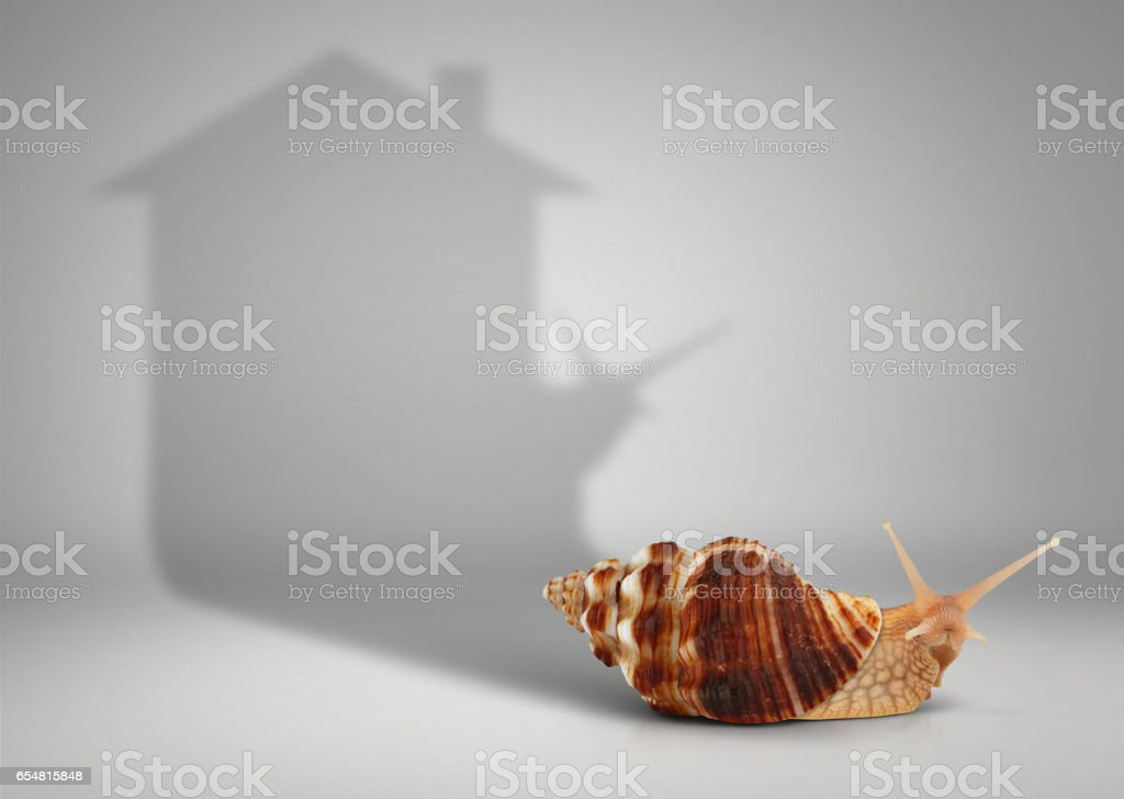 Real estate concept, snail with shadow house on grey stock photo