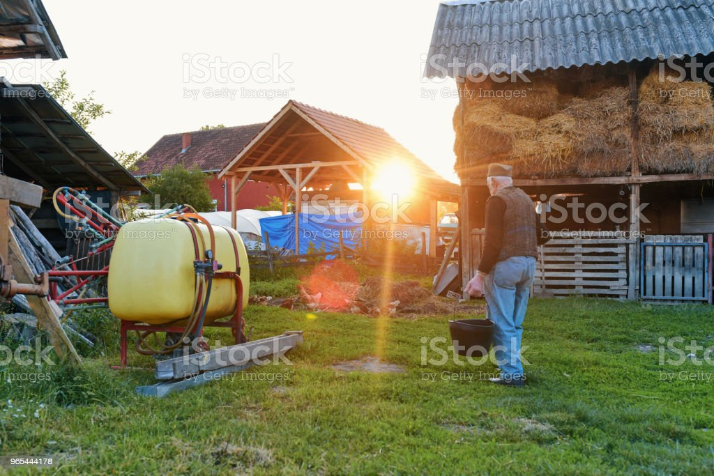 Real Farmer walking royalty-free stock photo