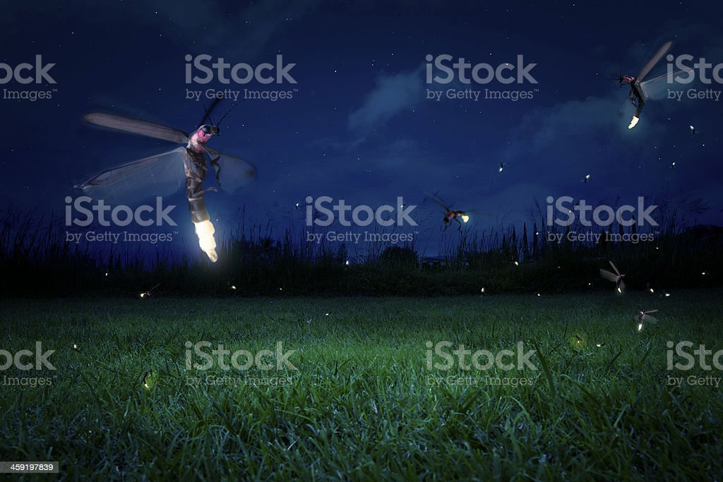 Real fireflies on a grass field at night stock photo