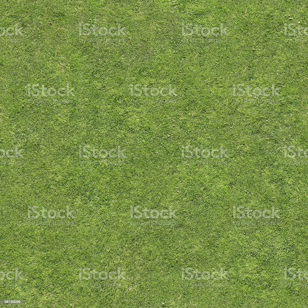 Real Grass royalty-free stock photo