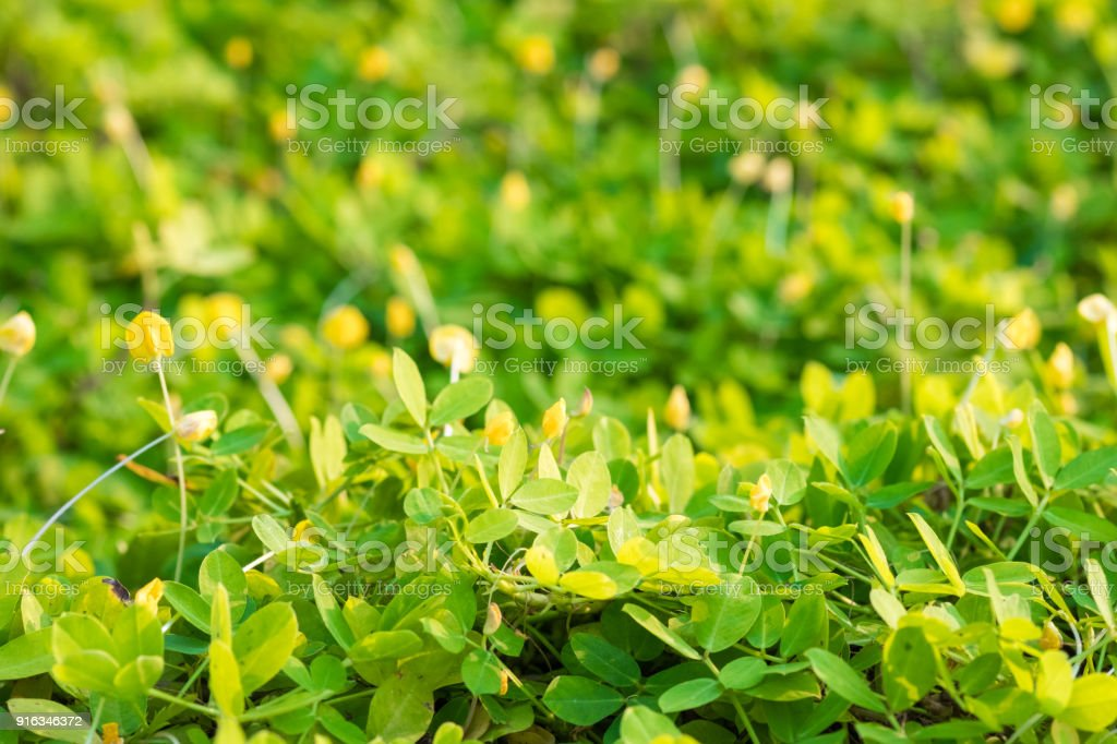 Real green grass background. stock photo