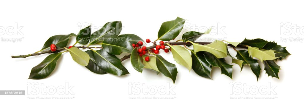 Real Holly Branch with Berries royalty-free stock photo