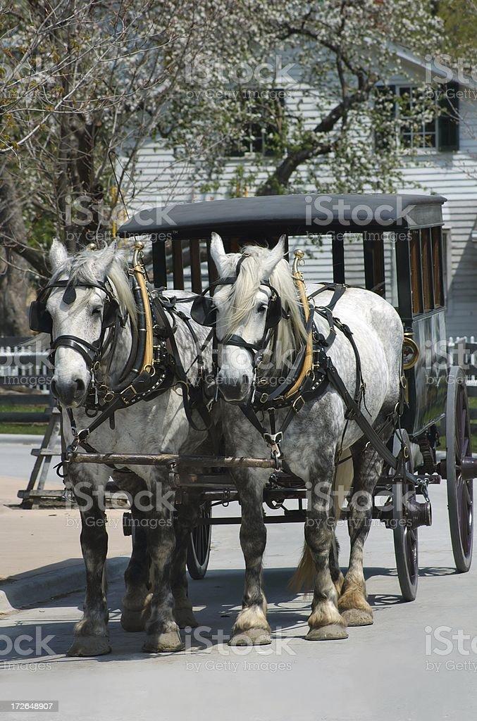 Real Horsepower stock photo