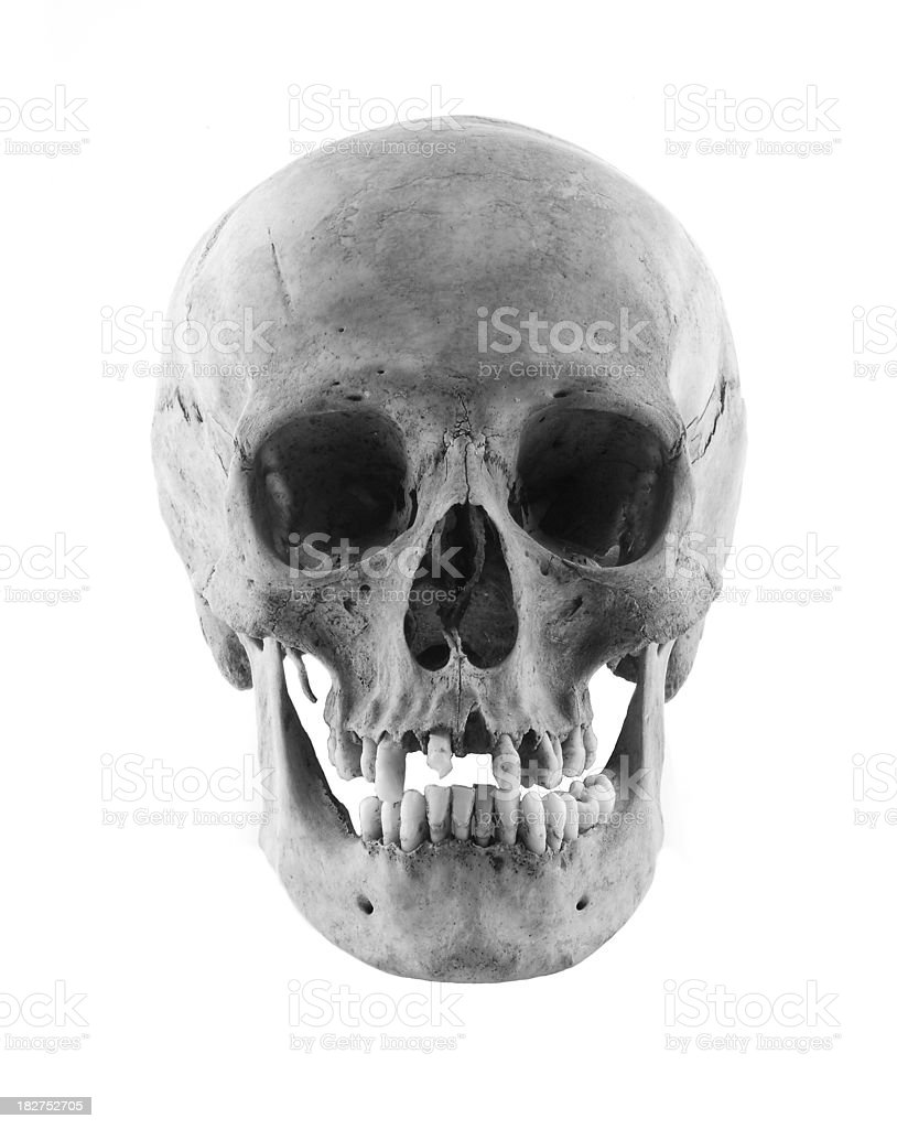 Real Human Skull Front Stock Photo More Pictures Of Anatomy Istock