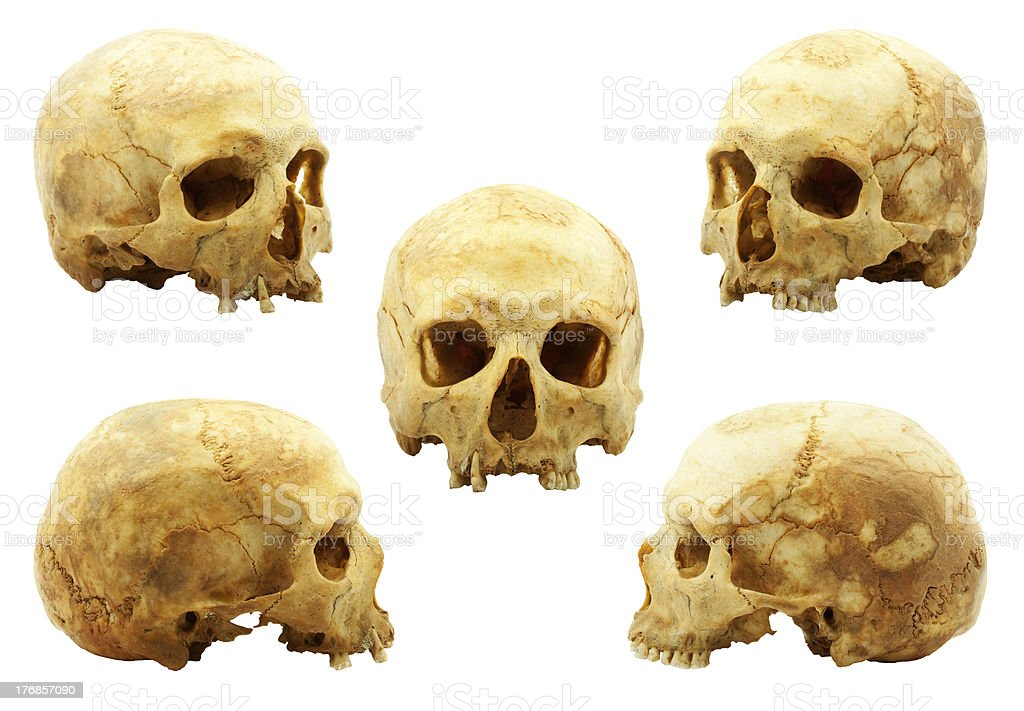 Real Human Skull Stock Photo More Pictures Of Anatomy Istock