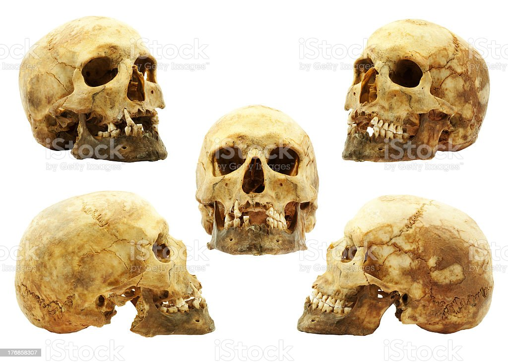 Real human skull stock photo
