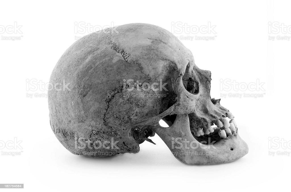 Echter Menschlicher Schädel Profil Stock-Fotografie und mehr Bilder ...