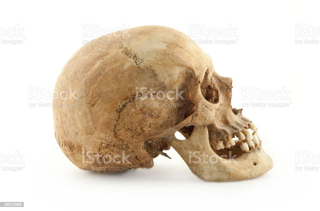 Real Human Skull Profile stock photo