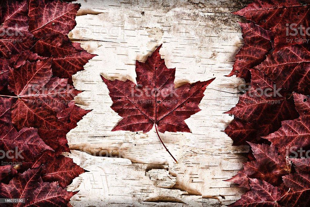 Real Leaf Canada Flag on Birch Bark stock photo