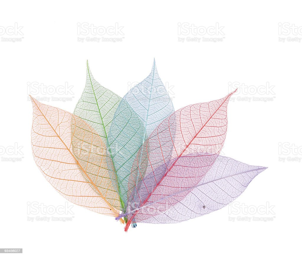 Real leaf with detail vein and various colors royalty-free stock photo