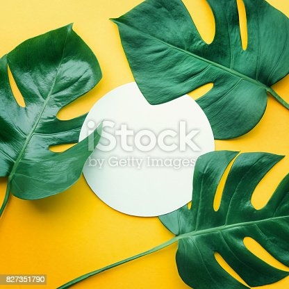 istock Real leaves with white copy space background.Tropical Botanical concept 827351790