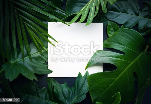 istock Real leaves with white copy space background.Tropical Botanical concept 829381292