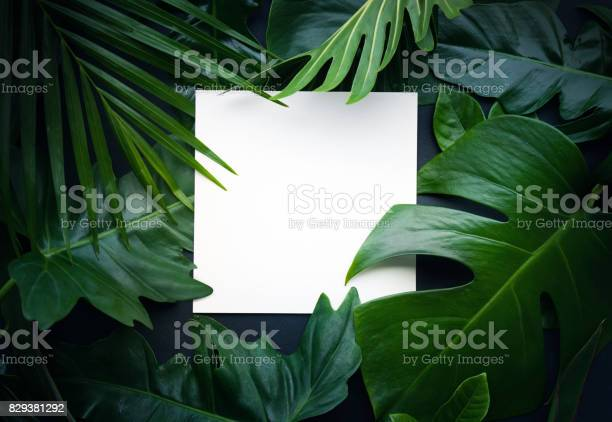 Real leaves with white copy space backgroundtropical botanical picture id829381292?b=1&k=6&m=829381292&s=612x612&h=siwrbvbscobqarlxtigyifnnlsdrf6wj1bcwcyhtsxc=