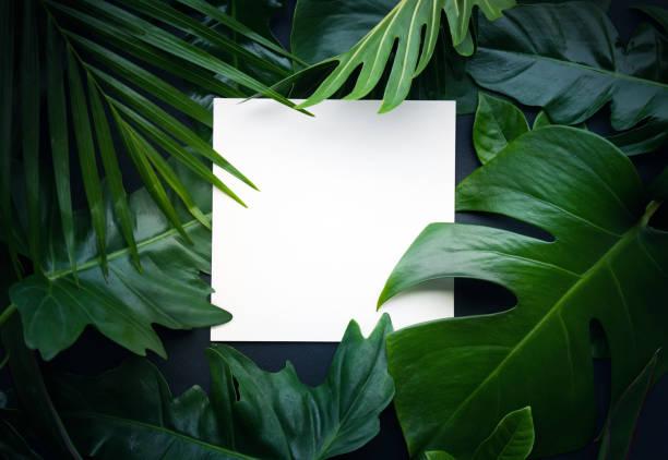 echte blätter mit weißen raum hintergrund kopieren. tropischen botanischen konzept - palmengarten stock-fotos und bilder
