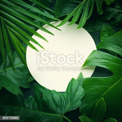 istock Real leaves with white copy space background.Tropical Botanical concept 829733992