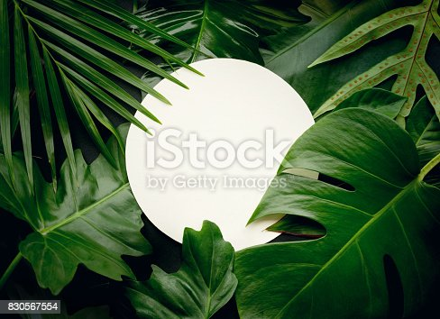 istock Real leaves with white copy space background.Tropical Botanical concept 830567554