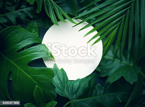 istock Real leaves with white copy space background.Tropical Botanical concept 846067966