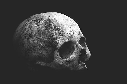 Real old human skull on a black background cranium closeup.