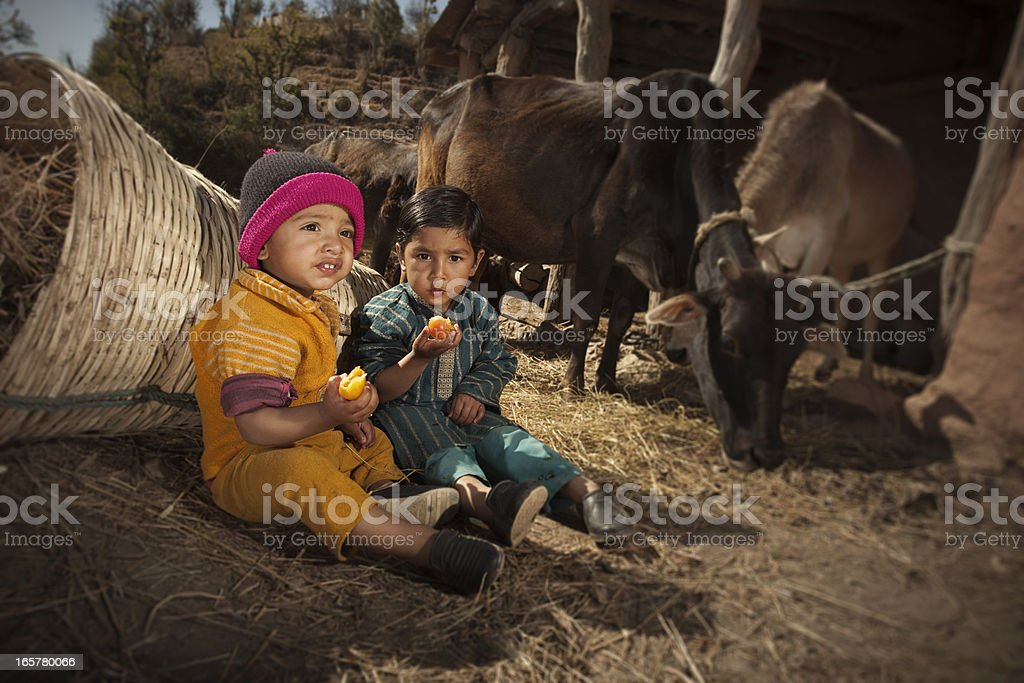 Real people from rural India: Farmer's children eating tomato stock photo