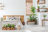 Real photo of a botanical bedroom interior with wooden shelves, tables, double bed, plants and empty wall next to a window with blinds. Place your painting
