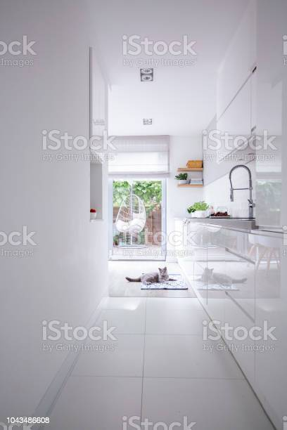 Real photo of a clean white kitchen interior with glossy cupboards picture id1043486608?b=1&k=6&m=1043486608&s=612x612&h=mggserdarbk98lbytno3r5zhnqajtcmnghg8ngbeyok=