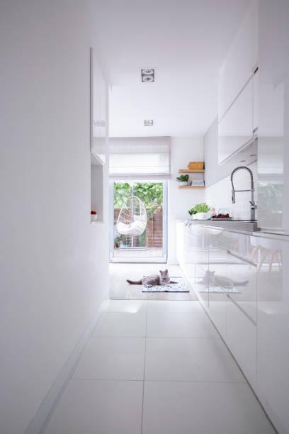 echtes foto von einem sauberen, weißen küche interieur mit glänzenden schränke, stahl wasserhahn und eine graue katze auf dem boden - katzenschrank stock-fotos und bilder