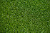 100% natural Putting Green, top view.