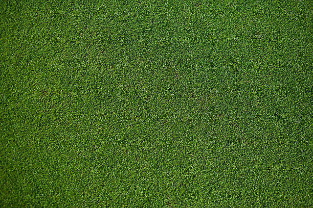 Real Putting Green 100% natural Putting Green, top view. turf stock pictures, royalty-free photos & images