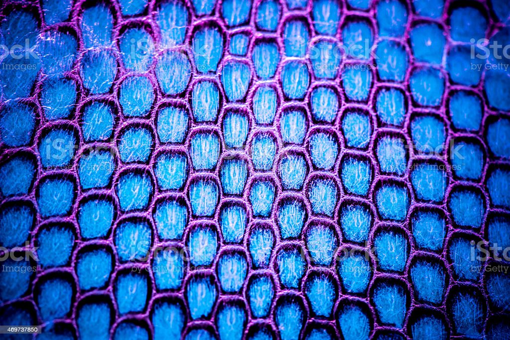 Real snake skin background, macro shot stock photo