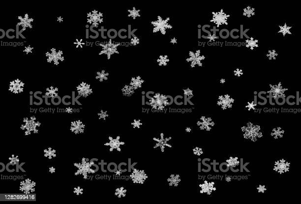 Photo of Real snowflakes on black background