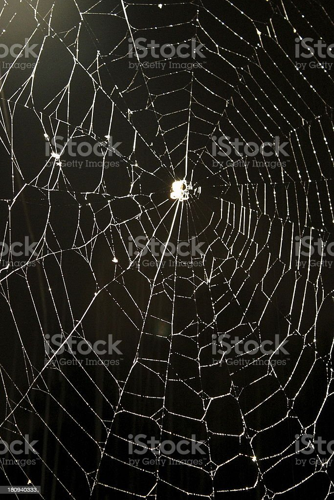 Real Spider Web Rainny Nigh royalty-free stock photo