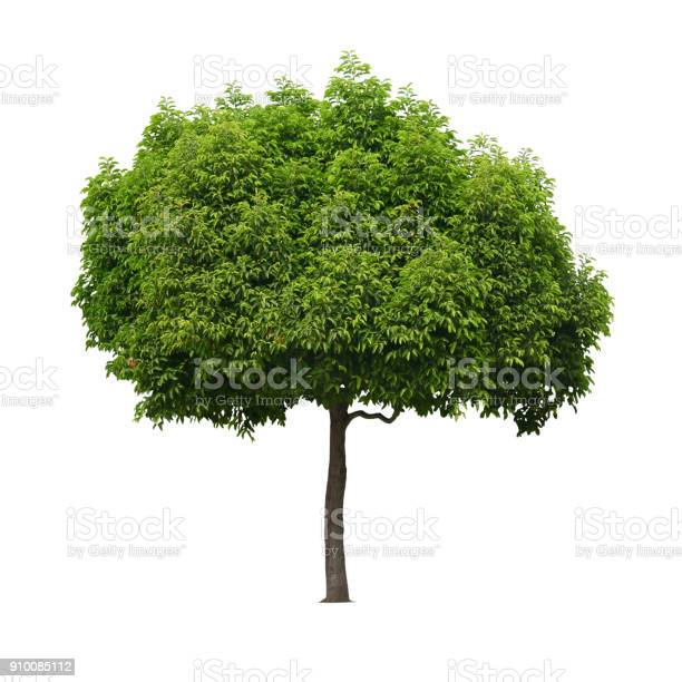 Real tree isolated white background picture id910085112?b=1&k=6&m=910085112&s=612x612&h=gty7o2zabai1fleg9dhkry4b0t gof iteb2creo3aq=