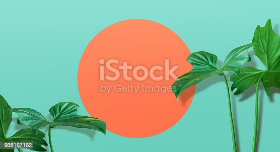 istock Real tropical leaves on pastel color background.summer concept 938167162