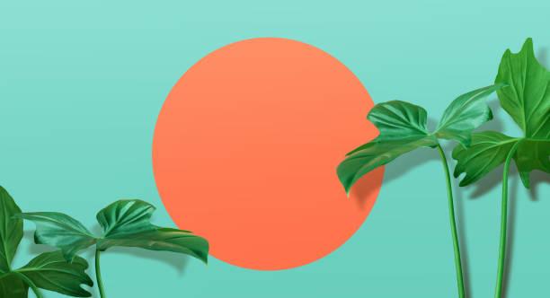 真實的熱帶葉子在柔和的顏色背景. 夏季概念 - 熱帶式樣 個照片及圖片檔